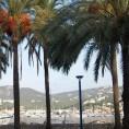 port palms