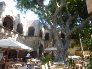 rhodes giant benjamin tree